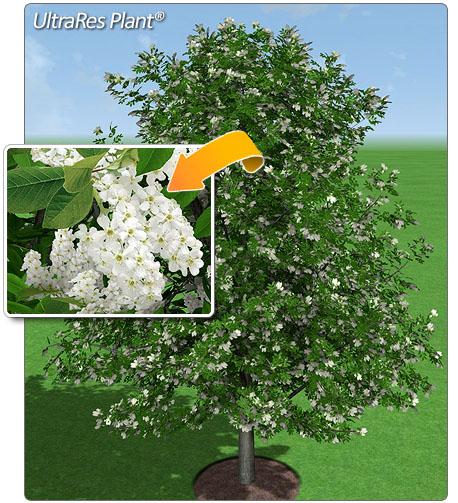 New Landscape Design Software Realtime Landscaping Pro
